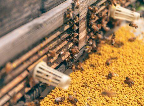 Wyroby pszczele