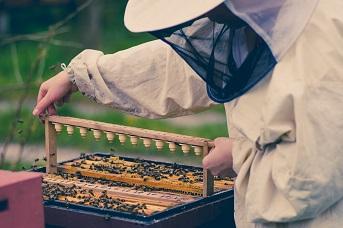 Tajniki zawodu pszczelarstwa