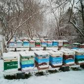 Pasieka w zimowej scenerii 😍 Widok rzadko spotykany w ubiegłych latach, dlatego koniecznie trzeba go uwiecznić❗ 🐝 Cieszyscie się z tak białej zimy w tym roku czy chcecie już wiosny? 🤔  #snow #apiary #pasieka #ule #natur #naturelover #honey #miód #pszczelarze #pasiekazimą #zimawpasiece