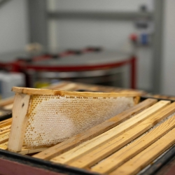 Cały czas wirujemy dla Was pyszny miód wielokwiatowy (dostępny jeszcze płynny)🍯 Niedługo zaczniemy rzepakowy, a później faceliowy, gryczany i to co jeszcze przyniosą nam nasze pszczółki 🐝😁  link do płynnego miodu wielokwiatowego -> https://sklep.pasiekazpasja.pl/miody-plynne-z-wirowki/188-352-miod-wielokwiatowy-45-g.html#/38-gramatura-sloik_1050g  #wielokwiatowy #pysznymiód #polskimiód #polskapasieka #pasiekazpasją #hawran #miódwielokwiatowy #miódrzepakowy #miódgryczany #akacja #miódakacjowy