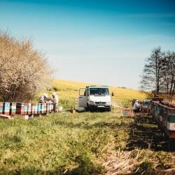 Słoneczne☀️ i ciepłe dni wykorzystujemy na pracę przy pszczołach🐝, aby mogły przynieść dużo pysznego i zdrowego miodu🍯❗️  A Wy jak spędzacie takie dni❓😊  #natura #wiosna #pszczoły #pasieka #pasja #pracaprzypszczołach #pasiekazpasja #hawran #słonecznie #miód #pysznymiód