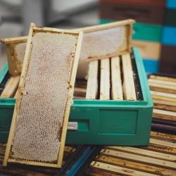 Cały czas wirujemy dla Was miody🍯. Tegoroczny miód mamy już wielokwiatowy, rzepakowy, faceliowy, faceliowo - chabrowy, nostrzykowo - faceliowy oraz akacjowy😍. Na jakie miody jeszcze czekacie❓😊  #miód #miodowe #localhoney #honeylove #honeybee #beelover #beehoney #pollenators #beelife #apiary #beekeeping #honeybees #nativebees #savebees #feedthebees #ilovebees #lovebees #apiculture #apicultura #beesofinstagram #backyardbeekeeping #beekeeperlife #beekeepinglife #facelia #bienen #miódfaceliowy #pasiekazpasja #hawran #nierozgrzewane