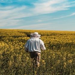 Natura...  #rzepak #miódrzepakowy #pszczelarz #rawhoney #beekeper #beekeeping #nature #natura